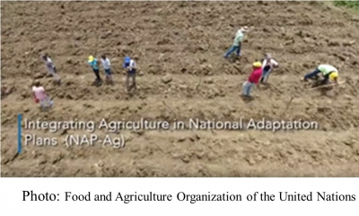 Integrating agriculture in national adaptation plans