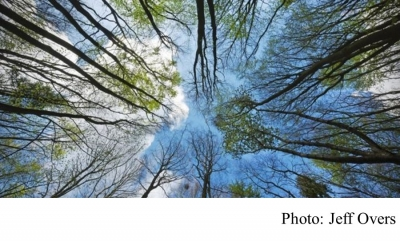 Climate change: UK forests 'could do more harm than good' (BBC - 20200407)