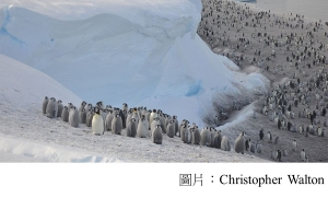 Antarctica: Thousands of emperor penguin chicks wiped out (BBC - 20190425)