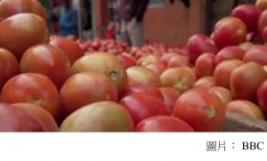Climate change: Why are tomato prices in Africa increasing? (BBC - 20200226)