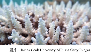 Great Barrier Reef outlook 'critical' as climate change called number one threat to world heritage (衛報 - 20201202)