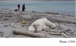 Cruise line faces backlash over shooting of polar bear (CNN - 20180729)
