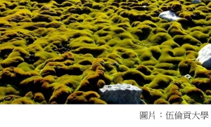 Climate change kills Antarctica's ancient moss beds (BBC - 20180925)
