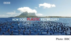 How does plastic kill wildlife?