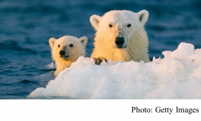 Climate change could make giving birth riskier for polar bears in northern Alaska (ABC News - 20191222)