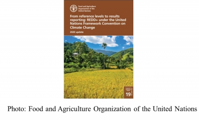 From reference levels to results reporting: REDD+ under the United Nations Framework Convention on Climate Change (UNFAO - 20201104)