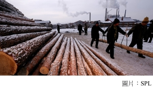 Climate change: China's forest carbon uptake 'underestimated' (BBC - 20201029)