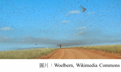 Locust swarms and climate change (聯合國環境計劃署 - 20200206)
