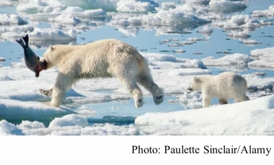 Arctic ice loss forces polar bears to use four times as much energy to survive – study (The Guardian - 20210224)