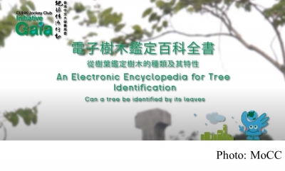 An Electronic Encyclopedia for Tree Identification